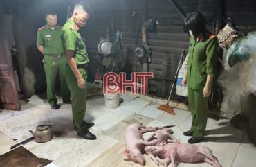 Mua lợn chết về quay bán cho khách hàng ở TP. Hà Tĩnh