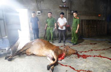 Phát hiện chủ cơ sở vận chuyển bò chết không rõ nguyên nhân đưa vào lò giết mổ